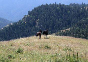 Horse Riding in Borjomi