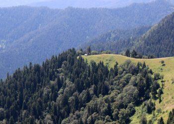Hike in Georgia